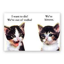 vodka kittens magnet u2013 the mincing mockingbird u0026 the frantic meerkat
