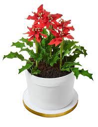 amazon com poinsettia flower pot cake grocery u0026 gourmet food