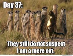 Mere Cat Meme - hahaha a mere cat laughter lines pinterest cat humor and animal