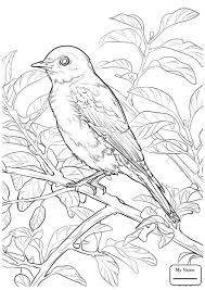 bluebird birds eastern blue birds on barbed wire coloring pages