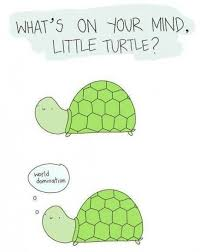 Funny Turtle Memes - turtle memes google search angies awsome board pinterest