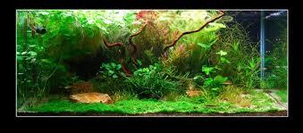 Aquascaping Plants Easy Life Aquascaping Aga Easy Life