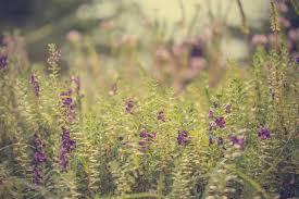 flowers denver flowers denver stapleton home garden gifts store