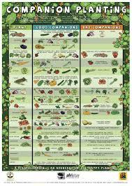 die grundlagen der permakultur companion planting chart