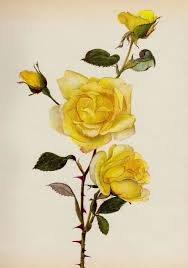 download simple yellow rose tattoo danielhuscroft com