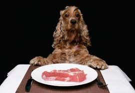 Dogs At Dinner Table Dog Food Brands And Mr Chewy How Did We Get It So Wrong Healthy