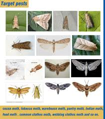 amazon com pantry and clothes moth trap with natural pheromone
