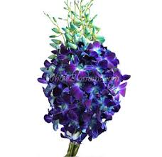 blue dendrobium orchids buy wholesale bulk dendrobium orchids flower for weddings