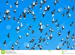 Dove Migration Map Flying Doves Stock Photo Image 4730420