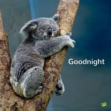 Goodnight Meme Cute - good night messages for my love salonseven ru
