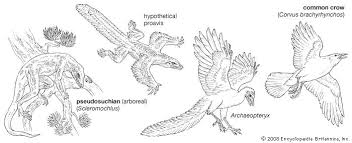 bird muscles organs animal britannica