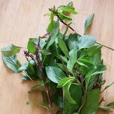 les herbes de cuisine ingrédients les herbes aromatiques asiatiques en quête gourmande