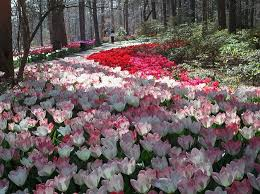 Arkansas travel alone images Welcome spring at arkansas 39 garvan woodland gardens jpg