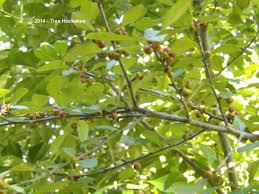 plants native to texas texas native plant week seeds n berries my gardener says u2026