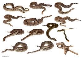 set of snakes one isolated stock photo by nobacks com