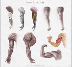 anatomy lessons how to improve faster in 6 steps by docwendigo