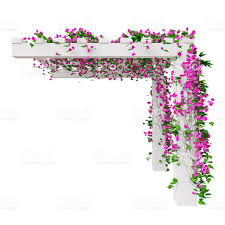 climbing plant flowers side view stock photo 498186708 istock