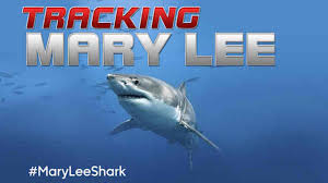 great white shark named mary lee spotted off new jersey coast near