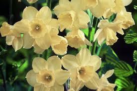 les fleurs comestibles en cuisine fleurs comestibles pour un souper aux pétales estran cuisine