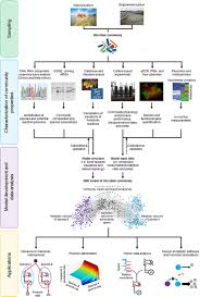 frontiers metabolic network modeling of microbial interactions