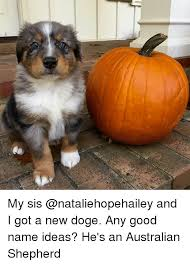 Doge Sex Meme - 25 best memes about doges doges memes