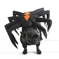 spider dog pet costume martha stewart