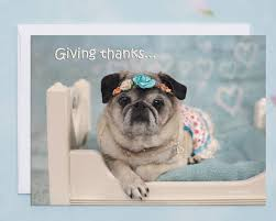 5x7 thank you card giving thanks with a grateful pug