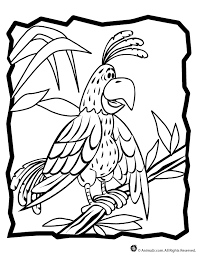 parrot coloring page woo jr kids activities