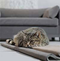 protection canapé chien lit pour chien et original design confort accessoires