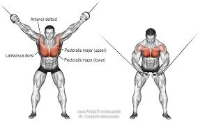 anterior deltoid archives page 4 of 6 weight training guide