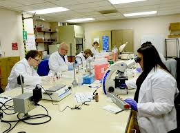 Medical Laboratory Technologist Resume Sample Medical Laboratory Technician Resume Sample Resume