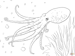 octopus coloring page 1593 505 470 free printable coloring pages