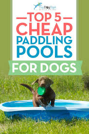 35 best best dog pools images on pinterest dog pools for dogs