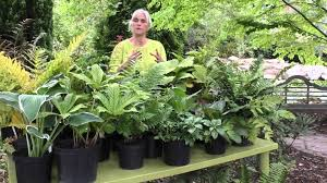 perfect plants for shade youtube