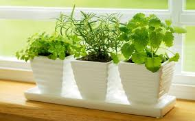 Window Sill Herb Garden Designs Excellent Ideas Windowsill Herb Garden Kit Roselawnlutheran