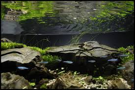 Aquascape Online Local River By Orchid Aquascaping Fish Tanks
