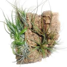 Wall Plant Holders 19 Best Plants Images On Pinterest Plant Holders Air Plants And