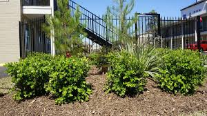 Twin Pines Landscaping by Twin Pines Apartments At 1109 W 25th Street Houston Tx 77008