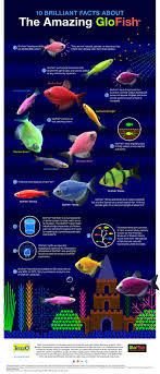 best 25 amazing fish tanks ideas on fish tanks fish
