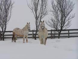 popular cold garden winter horses trees beauty beautiful snow