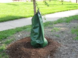 tree care watering trees city of st charles il