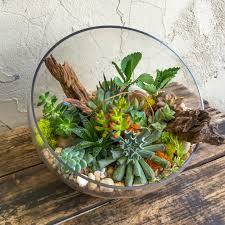 succulent terrarium in glass slant cut bowl u2013 urban jungle