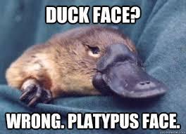 Platypus Meme - duck face wrong platypus face platypus face quickmeme