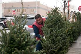 christmas tree collection in nyc starts january 4 get ready