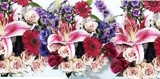wholesale flowers miami r j carbone wholesale florist flowers cranston ri weddingwire