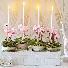 creative indoor plants decors for christmas u0026 new year
