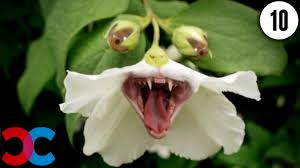 images of plants 10 plants that could kill you youtube