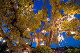 tree chandelier chandelier tree los angeles california atlas obscura