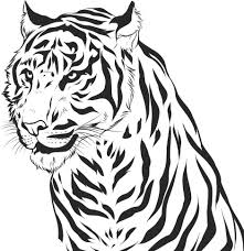 tigers face colouring pages for tigers coloring pages learn