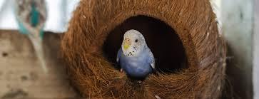 vital l full spectrum light for birds informational handouts on birds